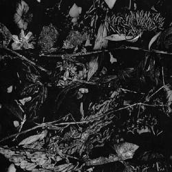 Turia - Dede Kondre, Digi CD